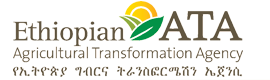 Ethiopian ata