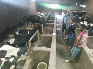 Training Young Stock Rearing