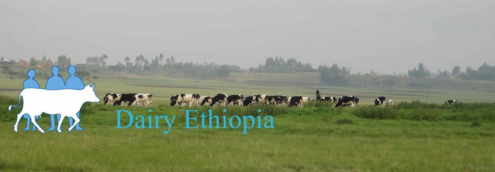 Dairy Ethiopia
